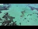 «Челюсти» наяву: стая акул пожирает кита