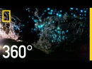 Glow Worm Caves of New Zealand in 360°   National Geographic