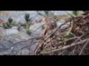 Гнездо Белохвостого орлана Норвегия 28.09.2016