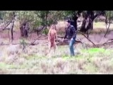В Австралии мужчина подрался с кенгуру, чтобы спасти свою собаку