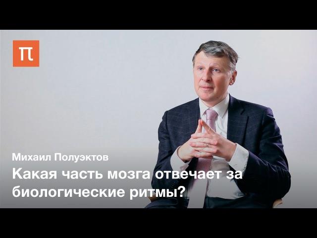 Сон и биоритмы — Михаил Полуэктов