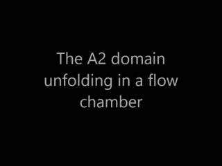 The A2 domain unfolding in a flow chamber