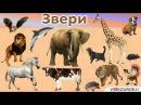 """Урок окружающего мира на тему """"Какие бывают животные."""""""