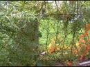 Живая изгородь и живые структуры на paviva