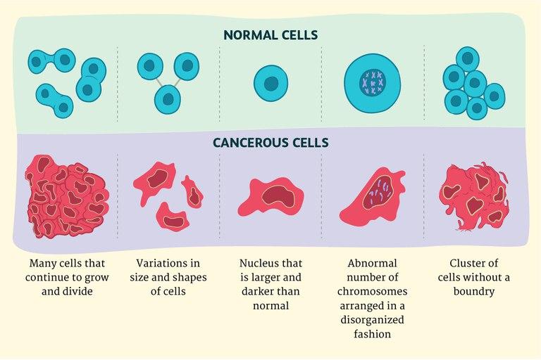 Раковые клетки и нормальные клетки в чем отличие?