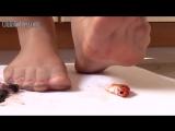 Barefoot goldfish crush