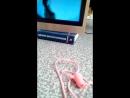 Asusha_video_ramka