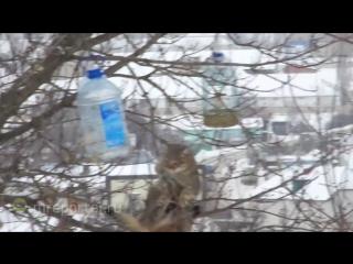 Кот-экстремал ворует сало из кормушки для синичек