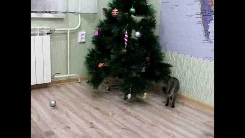 Кот и Новогодняя елка! Смех, да и только!))