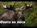 Охота на лося и уток Охота в Якутии