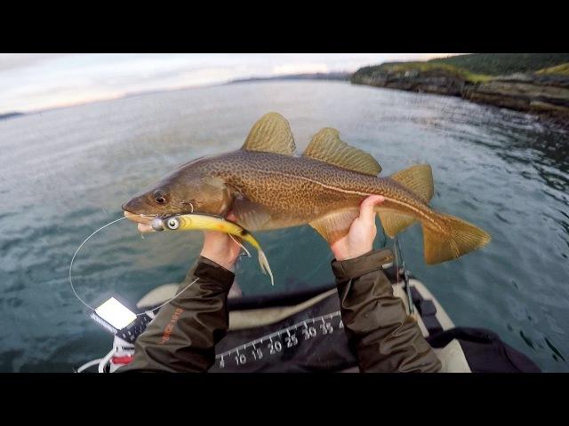 Turskan kalastusta kelluntarenkaasta Jäämerellä | Cod fishing from bellyboat