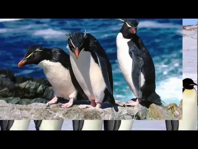 Песня про пингвинов