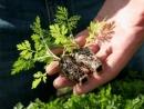 Трава которая дарит жизнь и убивает 98 процентов раковых клеток 3 секретных рецеп...
