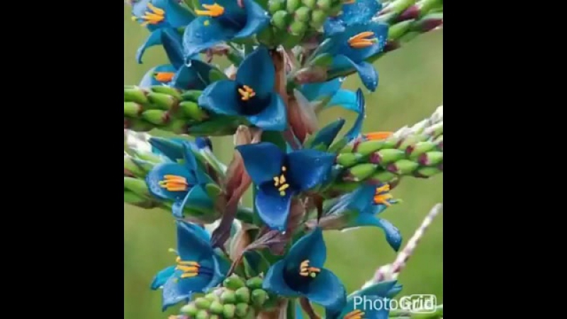 Экзотич цветы