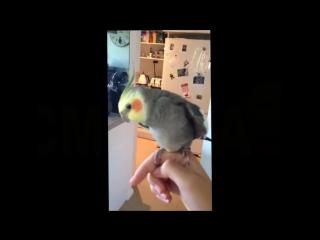Попугай исполняет дабстеп