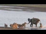 Time Tide - Norman Carr Safaris - Hercules the Elephant vs 14 Lions