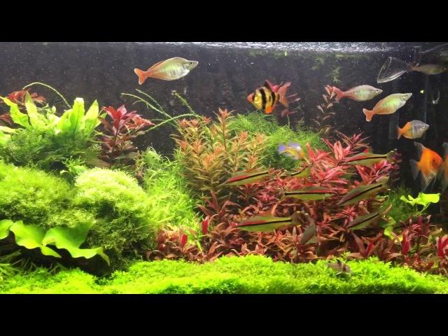 Planten Aquarium 300 L