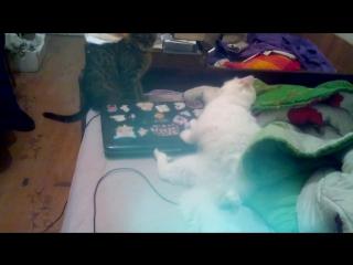 Адские кошки *-*