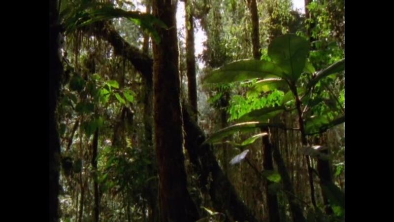 Дикая Австралазия (2003) островная дуга