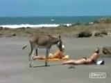 Ишак с длинной елдой напал на девок..!!