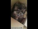 """Говорящая  кошка Мальвина """"Мама"""" ))"""
