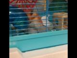 hamster_plush video