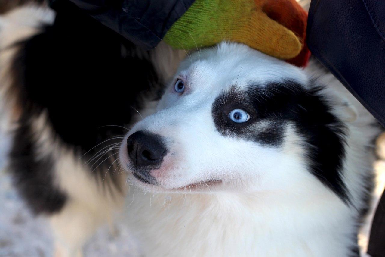 Image result for border collie собака объятие