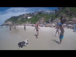 Собакен, который любит футбол