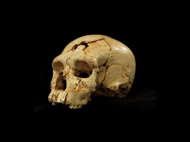 Эволюция человека: на сколько процентов мы неандертальцы? • Филипп Хайтович