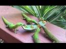 Geckos With Yoshi Sounds