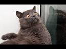 Испуганные коты. Смешное видео про кошек. Ржака.