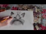 Как нарисовать йоркширского терьера