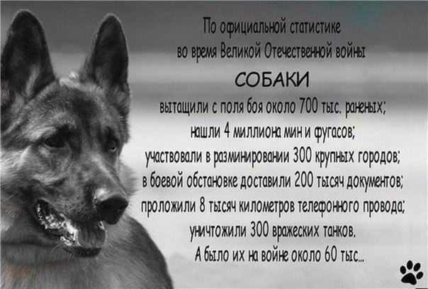 Фото №456243894 со страницы Дмитрия Скляра