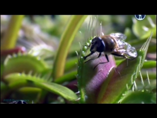BBC «Жизнь на планете Земля: Борьба за выживание» (Документальный, животные, 2009)