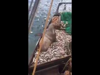 Захотел рыбки