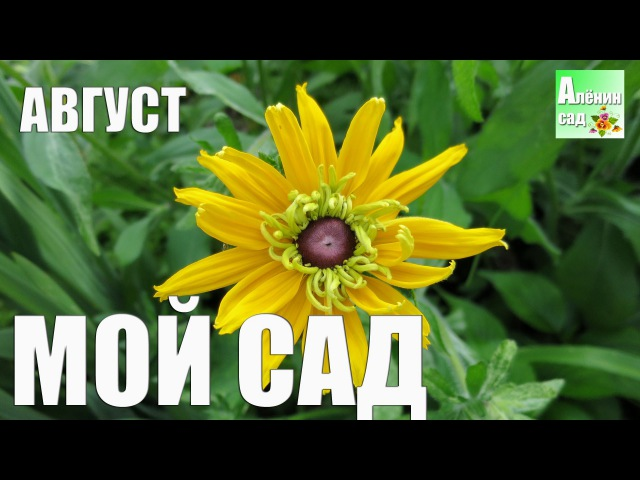 Алёнин сад в АВГУСТЕ 2016 Alena's garden in AUGUST 2016 Allotment diary
