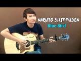 (Ikimono Gakari) Blue Bird - Nathan Fingerstyle