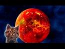 Наука для детей Космос Венера Семен Ученый