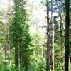 Защитим Сертоловский лес