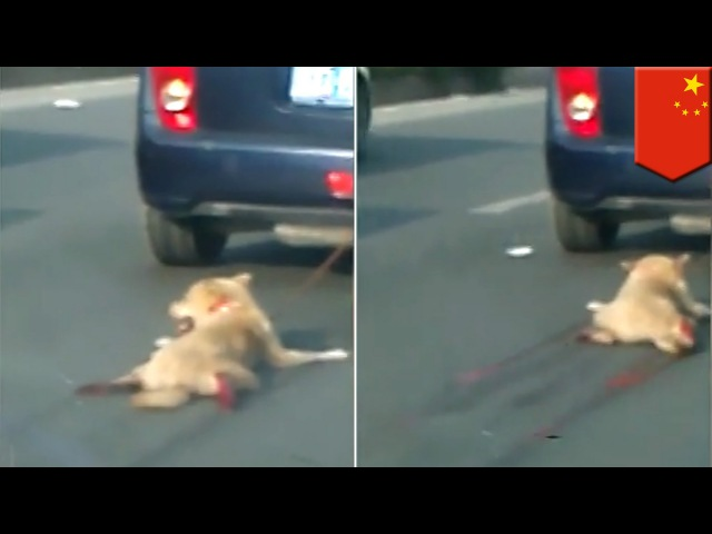 Dog dragged behind car in China sparks online manhunt for perpetrator