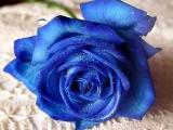 Ray Anthony - Blue Velvet - wmv