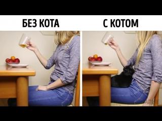 AdMe.ru - жизнь с котом и без