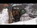 Засунул руку в клетку с медведем