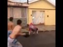 йййй . webm жирный пидор вправляет зубы мексиканскому ребенку за то что он разрешил поиграть в его мяч