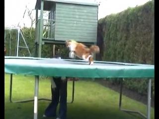 Кошка на батуте