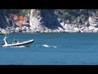 Наезд на кита