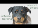 The Animal Sounds: Rottweiler  Barks, Growls, Snarls - Sound Effect - Animation