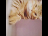 nagual_rinpoche video