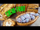 Как открыть и есть Какао фрукт (какао плод) HOW TO OPEN AND EAT CACAO FRUIT