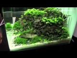 The Art of the Planted Aquarium 2015 - Scapers Tank (Nano) category, part 3
